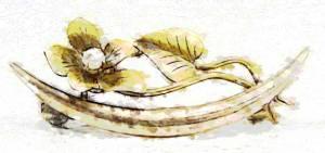 golden-seed_03060626.jpg
